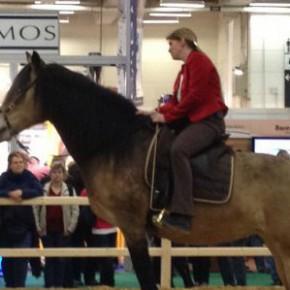 Bericht von der Hansepferd 2012