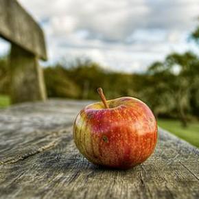 Apfelschnitten