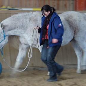 Seminarbericht: Positives Pferdetraining