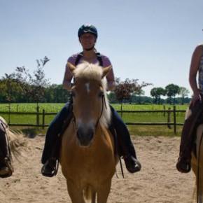 Eine Reitbeteiligung gesucht - als Reiter